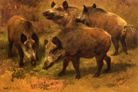 four-boars-in-a-landscape